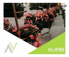 Praca przy kwiatach w Holandii od zaraz