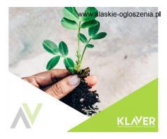 Holandia- praca od zaraz- pielęgnacja sadzonek!- dużo godzin